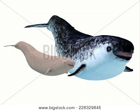 Narwhal Female Whale With Calf 3d Illustration - The Narwhal Is A Medium Sized Toothed Whale That Li