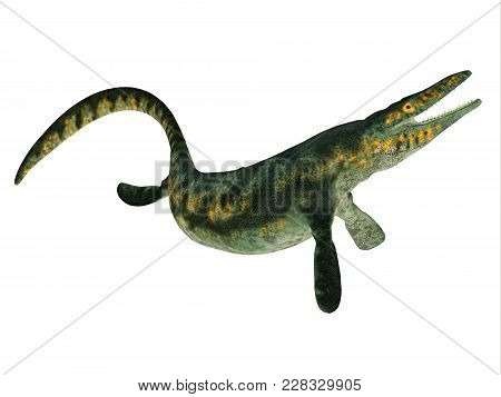 Tylosaurus Reptile Side Profile 3d Illustration - Tylosaurus Was A Carnivorous Marine Reptile That L