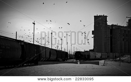 Flock of Birds Flying Near Trains and Grainery