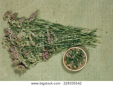 Yarrow. Dry Herbs For Use In Alternative Medicine, Phytotherapy, Spa, Herbal Cosmetics. Preparing In