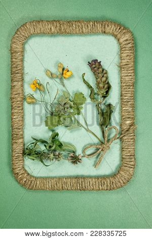 Herbarium. Motherwort, Prunella Vulgaris, Celandine. Dry Plants In Framework Made Of Jute Thread. Sc