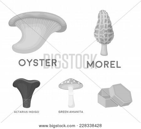 Morel, Oyster, Green Amanita, Actariu , Indigo. Set Collection Icons In Monochrome Style Vector Symb