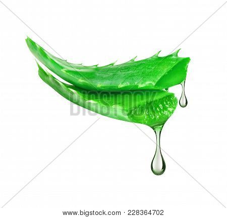 Essence From Aloe Vera Plant Drips From Stems On White Background