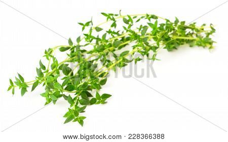 Fresh Herb, Thyme Isolated On White Background