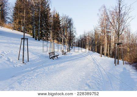 Winter Landscape. Snowy Winter Trees Along The Winter Park Under Falling Snow. Winter Snowy Scene Wi