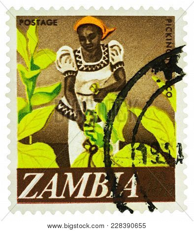 Moscow, Russia - February 24, 2018: A Stamp Printed In Zambia Shows African Woman Picking Tobacco, C