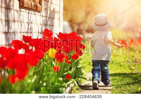 Little Child Walking Near Tulips On The Flower Bed In Beautiful Spring Day. Happy Baby Boy Outdoors
