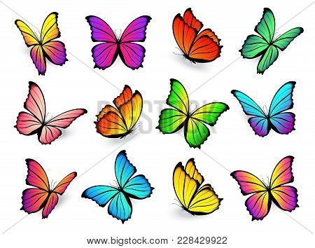 Butterflies Isolated On White Background. Vector Flying Colorful Butterfly Set With Bright Spring Co