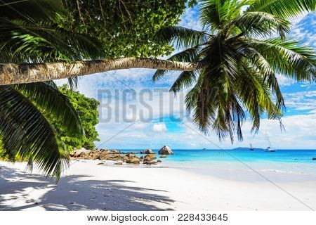 Paradise Beach.white Sand,turquoise Water,palm Trees At Tropical Beach,seychelles 25