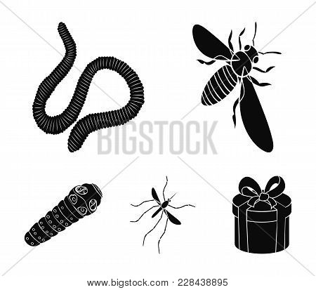 Arthropods Insect Mosquito, Bee.earth Worm, Caterpillar, Vermicular Set Collection Icons In Black St