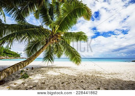 Palm Tree,white Sand,turquoise Water At Tropical Beach,paradise At Seychelles 7