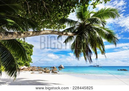 Paradise Beach.white Sand,turquoise Water,palm Trees At Tropical Beach,seychelles 43