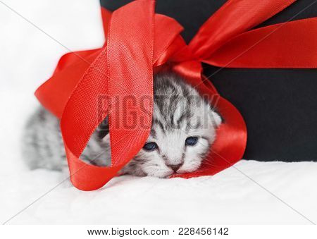 Cute Kitten With A Red Bow. A Kitten With A Red Ribbon. Kitten As A Gift