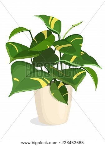 Indoor Plant In A Pot. Golden Pothos Plant. Vector Isolated.