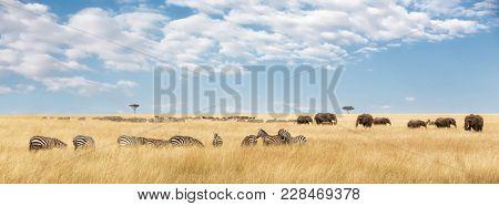Elephants herd and migrating zebra  in the Masai Mara. Panorama in popular social media banner dimensions