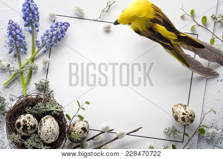 Quail nest with eggs,bird and spring flower on blank card