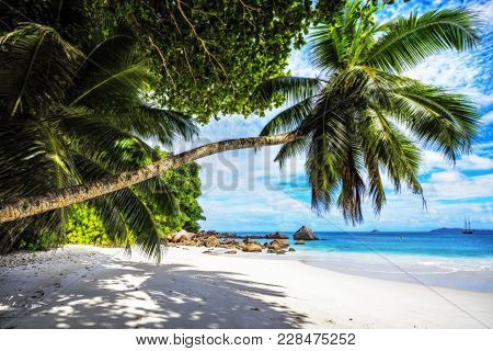 Paradise Beach.white Sand,turquoise Water,palm Trees At Tropical Beach,seychelles