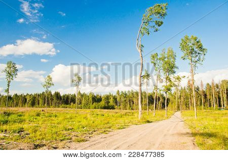 Road Through The Field And A Pine Forest