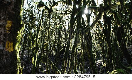 Panorama Of The Mossy Forest, The Sun Shines Through The Trees In The Mysterious Forest, 4k.