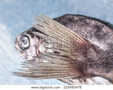 Conceptual Photo Of A Bream With The Tail In The Foreground