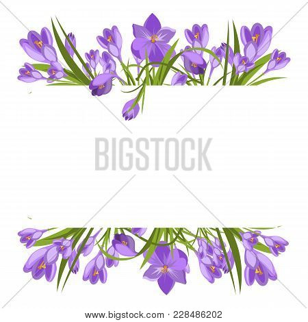 Crocus Flowers Spring Floral Beautiful Violet Flowering Illustration Vector Nature Purple April Plan
