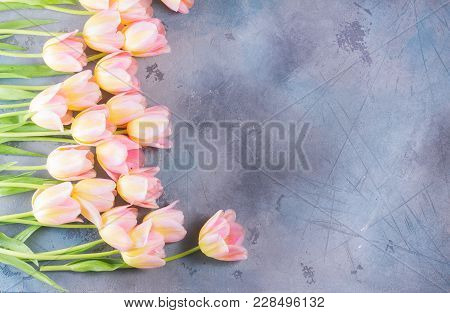 Pink And Yellow Tulips On Gray Stone Background, Top View Scene With Copy Space