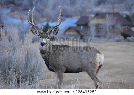 Deer Young Buck Big Antlers Six Point
