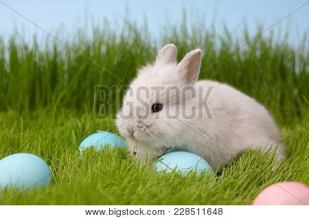 Easter Bunny Rabbit With Painted Eggs On Grass Lawn. Easter Holiday Concept.