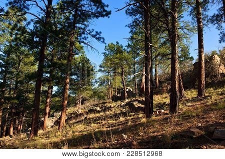 A Sloping View Of The Kaibab Forest From The Cliff Springs Hiking Trail Near The North Rim Of The Gr