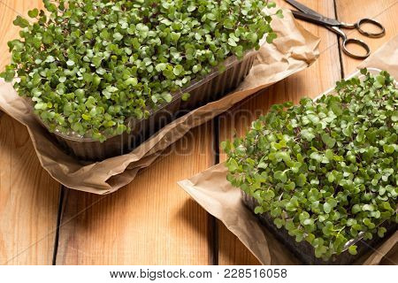 Homegrown Broccoli And Kale Microgreens On A Wooden Table