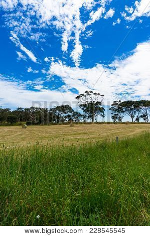 Beautiful Countryside Landscape Of Field With Straw Bales And Eucalyptus Trees On Sunny Day. South A