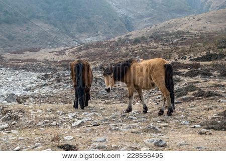 Horses Of The Mountains