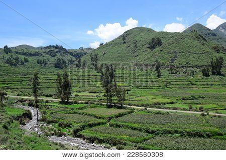 Landscape In The Colca Canyon, Arequipa Region, Peru