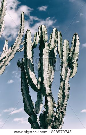 In The Sky  Like Backround Abstract   Cactus Plant
