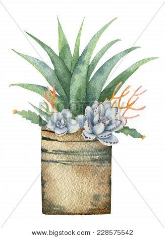 Watercolor Composition Of Cacti And Succulents In A Pot Isolated On White Background. Flower Illustr