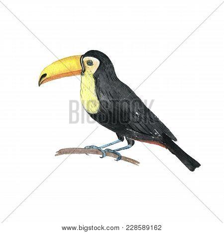Watercolor Drawing Toucan, Exotic Bird, Hand Drawn Illustration