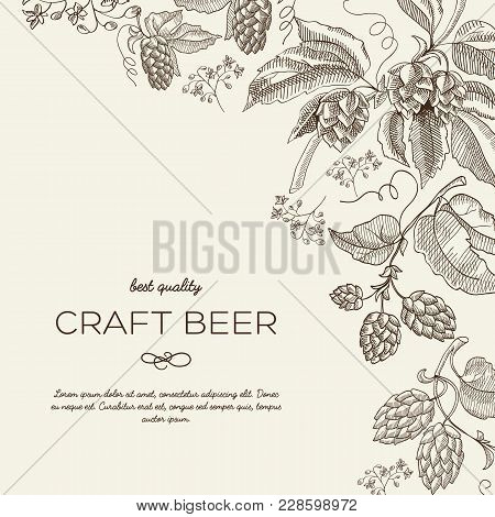 Abstract Natural Vintage Poster With Text And Beer Herbal Hop Plants On Light Background Vector Illu