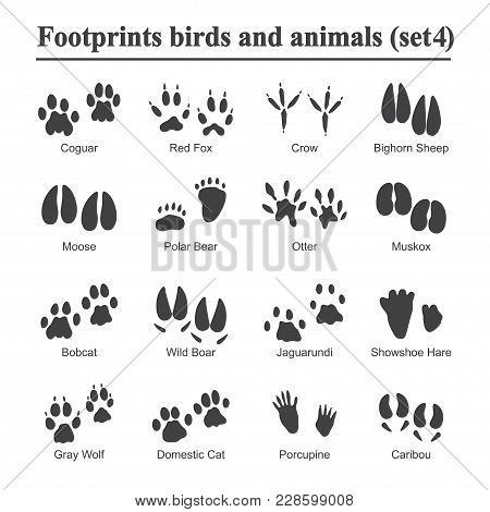 Wildlife Animals And Birds Footprint, Animal Paw Prints Vector Set. Footprints Of Variety Of Animals