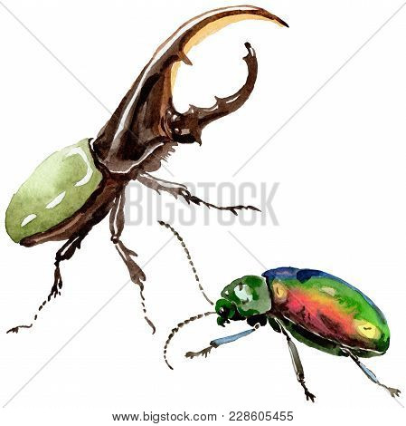 Exotic Beetles Wild Insect In A Watercolor Style Isolated. Full Name Of The Insect: Herkules-beetle.