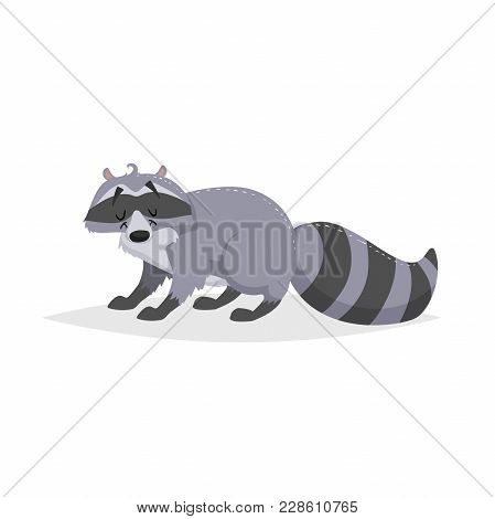 Cartoon Cheerful Standing Racoon. Forest Europe And North America Animal. Flat With Simple Gradients