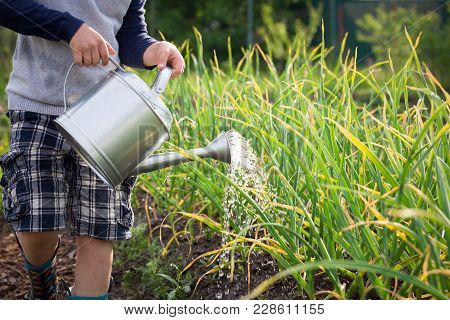 Cute Little Kid Boy Watering Plants With Watering Can In The Garden. Adorable Little Child Helping P