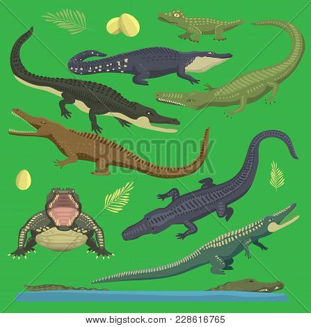 Crocodile Alligator Green Vector Reptile Illustration Of Wild Animals Set Collection Cartoon Style.