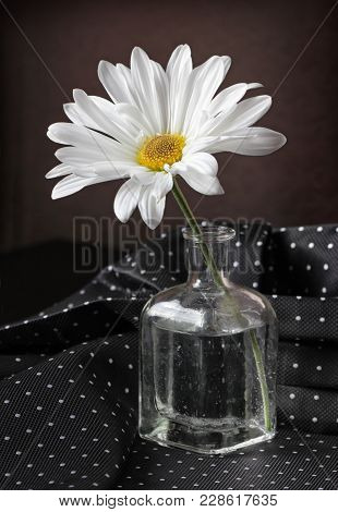 Still Life With White Daisy Flower In The Small Vintage Glass Botlle Against A Low Key Background. C