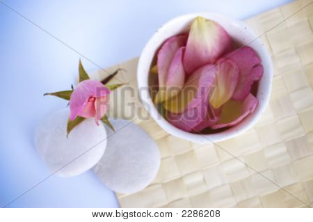 Rose Tranquility