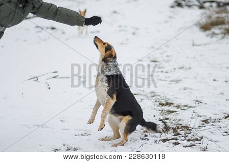 Dog Standing On Hind Leg For To Get Some Food