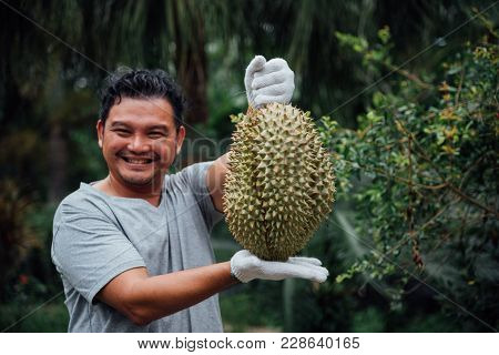 Asian Farmer Holding Durian Is A King Of Fruit