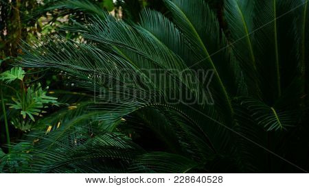 Plants With Long Green Leaves Grow In Dark Forest. Close-up Photography, Stalks Grow Down To Land. C