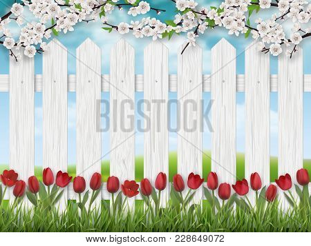 Red Tulip Flowers, Blooming Tree Branch And Grass On White Fence Background. Spring Landscape.