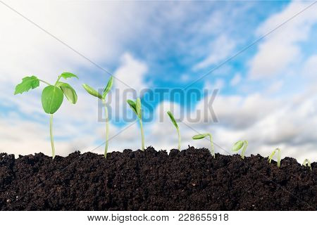 New Life Green Design Young Fresh Plant