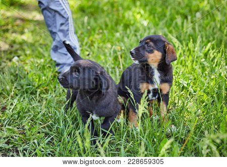 Happy Little Orange Havanese Puppy Dog Is Sitting In The Grass